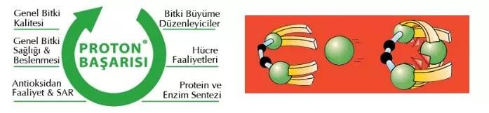 proton-basarisi-hobitohum-drt