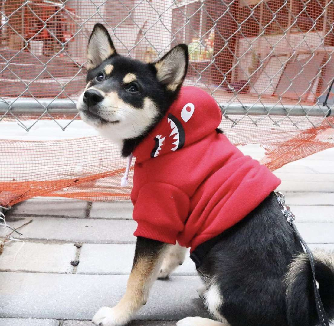 15 Jersey City Dogs You Need to Follow on Instagram