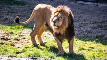 Sonniger Tag im Kölner Zoo