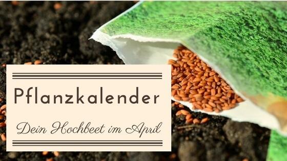 Llᐅ Pflanzkalender Dein Hochbeet Garten Im April Hochbeet Info De