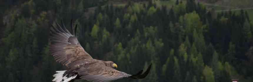 Christus - Gott selbst, der unser Leben sein möchte - der fliegende Adler