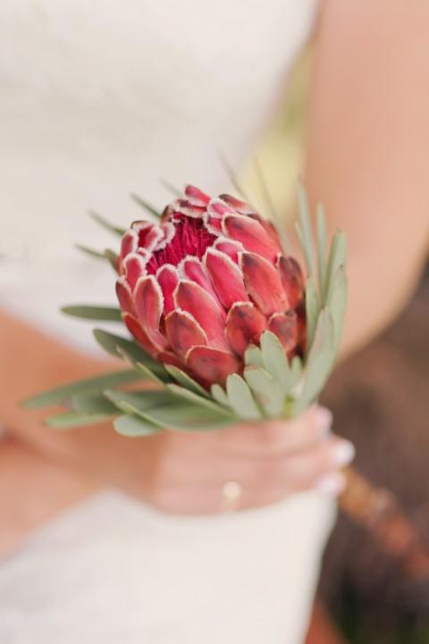 Blumen Und Bedeutung