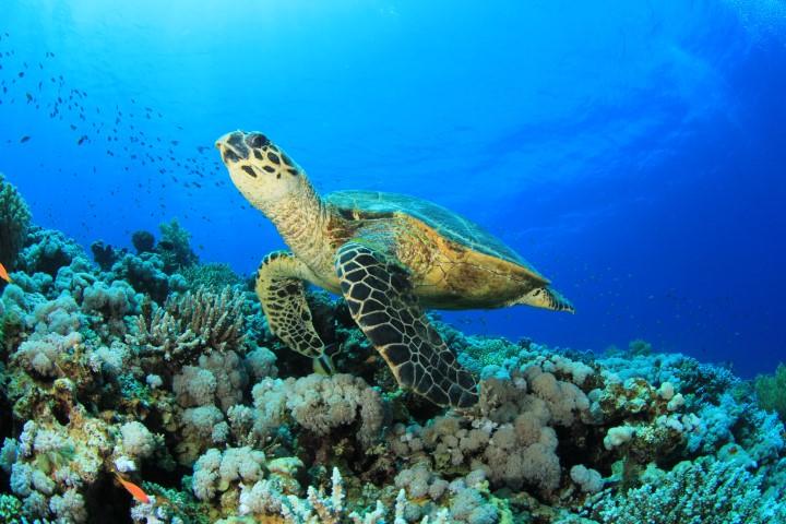 Ausflugsziele auf den Seychellen Ideen fr die Flitterwochen