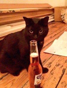 Anne Cat 2
