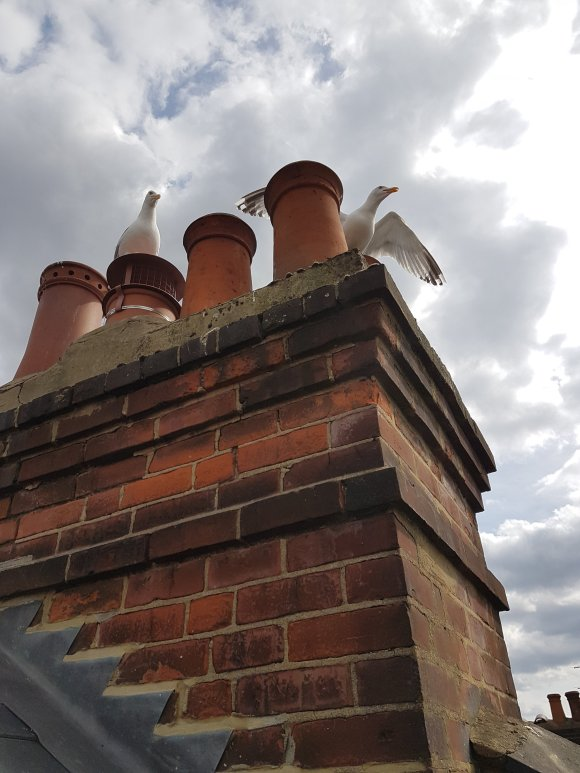 A hightop birdguard preventing seagulls entering the chimney system installed by hodgsons chimney sweeps devon