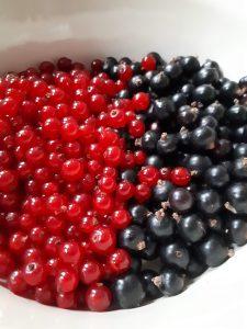 rote & schwarze Johannisbeeren
