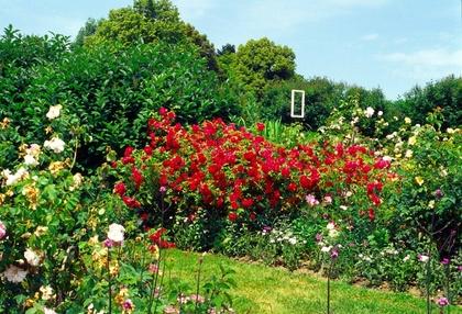 Pflanzen Im Garten Pflanzen Im Garten Alles über Bäume Blumen