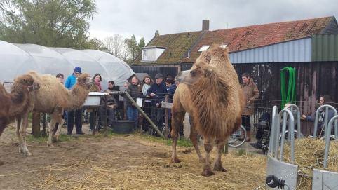 gehandicapten bij kamelen 2
