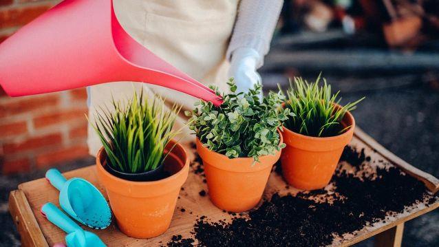 Cómo regar las plantas en macetas - Jardinatis