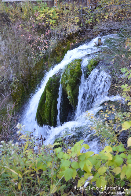 Visiting South Dakota in the fall? Make sure to head out to the Black Hills and take in Spearfish Canyon! It's a great drive, and the colors are AMAZING!