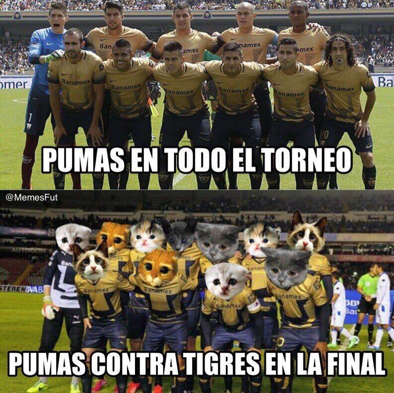 tigres4