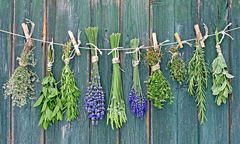 Trucos para conservar más tiempo las hierbas aromáticas
