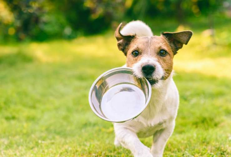 Dog holding a feeder