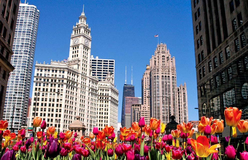 a_Tulips-Image.jpg