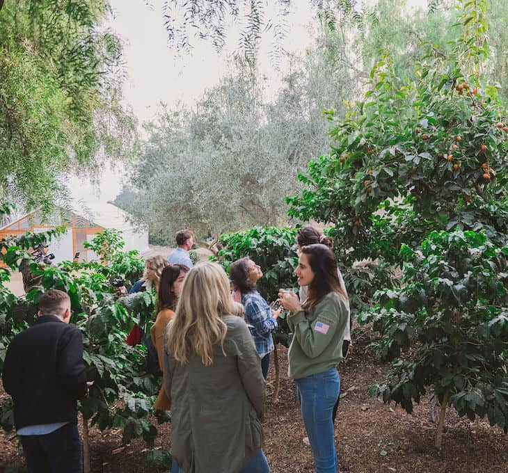 Coffe and tropical fruits growing at Frinj Coffee + Good Land Organics in Santa Barbara, CA. Lots of people standing in a coffee grove.