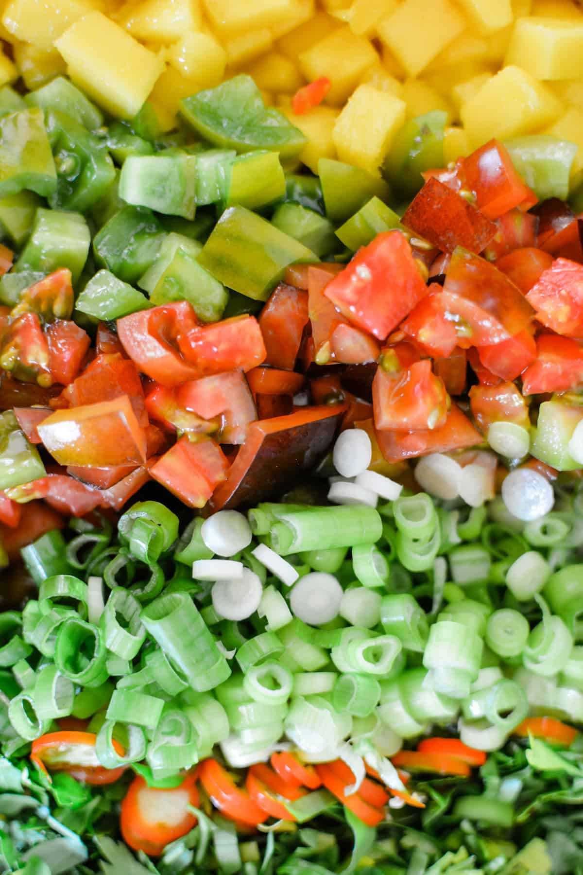 Diced mango, tomatoes, scallions, thinly sliced red Serrano peppers, and chopped parsley all lined up in a row.