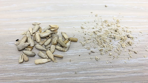 Holar - Blog - 13 Common Spices You Can (Cannot) Grind in Your Salt and Pepper Grinder - Sunflower Seeds