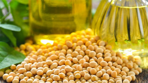 Holar - Blog - What are the uses for different edible oils when cooking - Soybean Oil Vegetable Oil