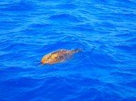 Snorkle-with-turtles-on-Crete