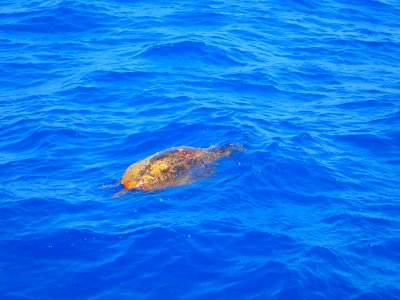 Snorkle-with-turtles-on-Crete