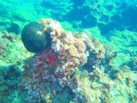 Diving in the medeiterenean sea