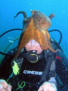 Learn-diving-on-Crete
