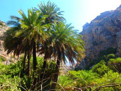 峡谷在克里特岛散步