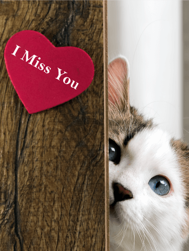 Peeking Cat Miss You Card Birthday & Greeting Cards By Davia