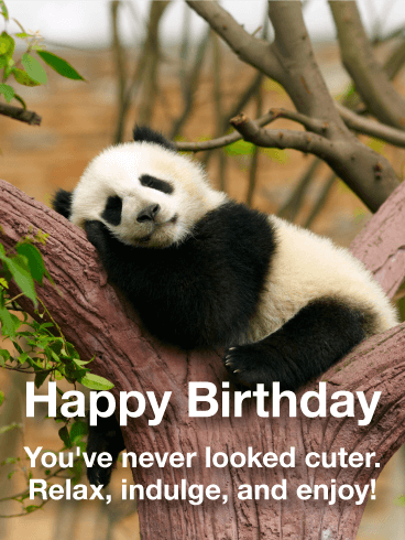 Adorable Panda Happy Birthday Card Birthday & Greeting