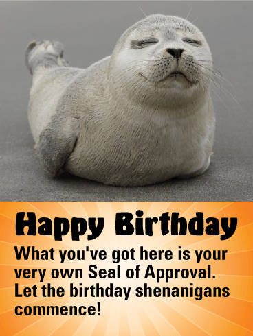 Funny Seal Happy Birthday Card Birthday & Greeting Cards