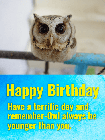 Cute Owl Happy Birthday Card Birthday & Greeting Cards