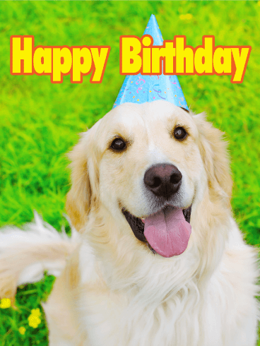 Charming Golden Retriever Happy Birthday Card Birthday