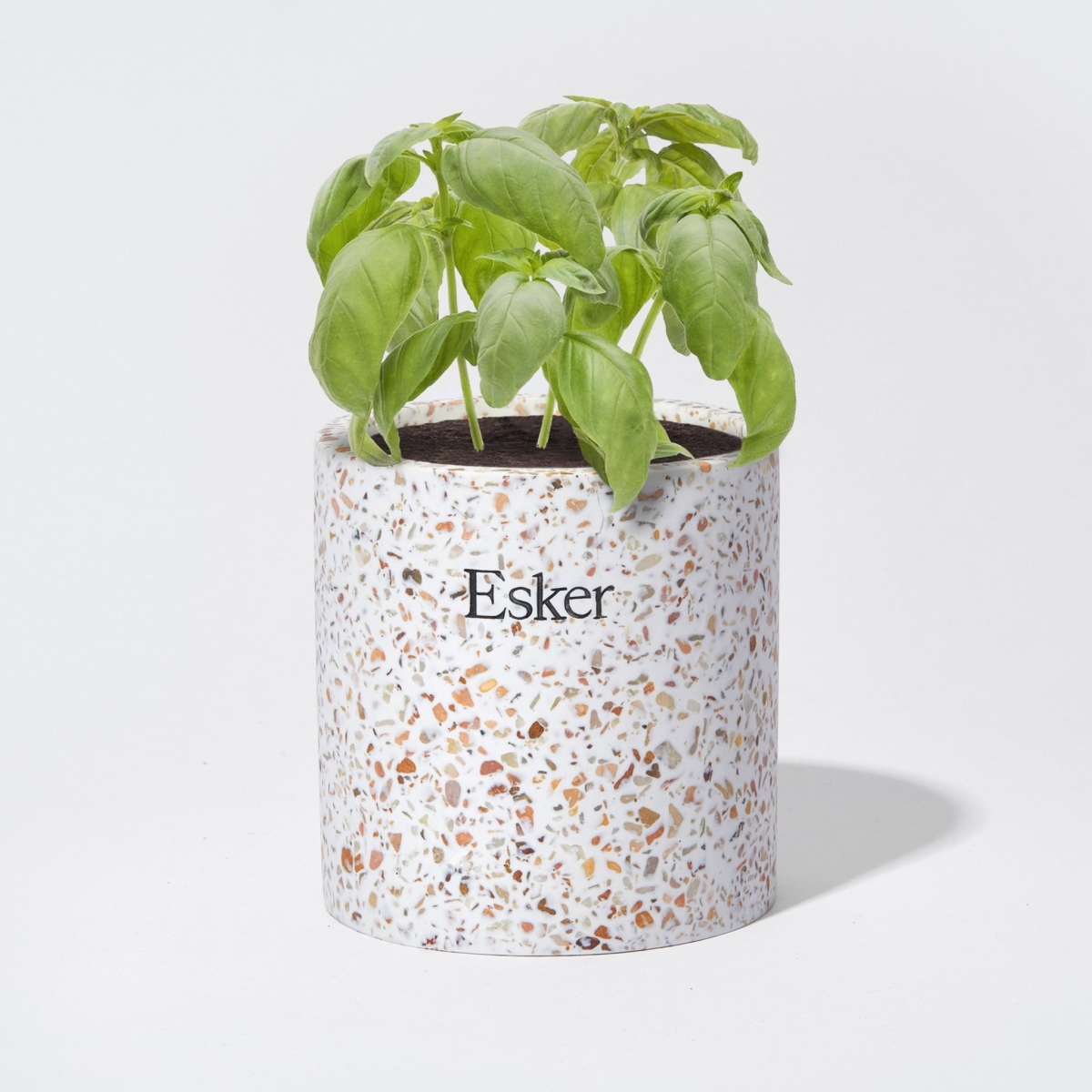 Basil in the plantable candle