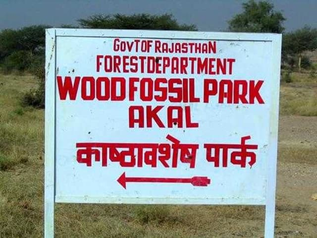 Places To Visit In Jaisalmer Tourism: National Wood Fossil Park Rajasthan