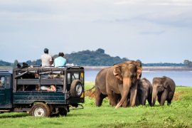 A Complete Guide To Visiting Yala National Park, Sri Lanka