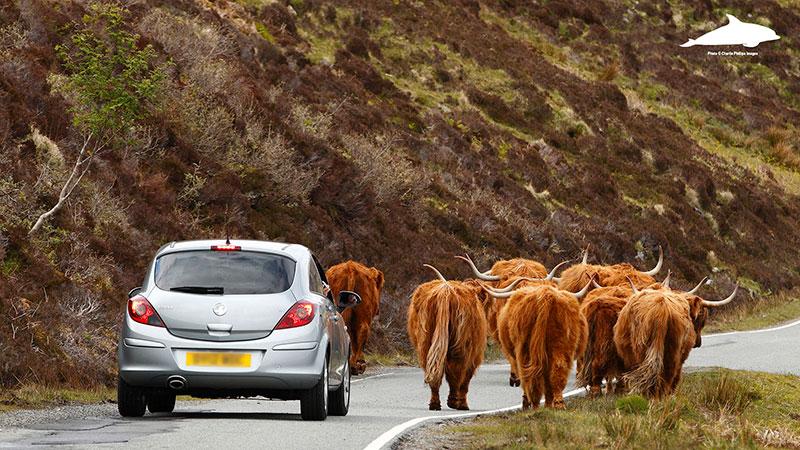 Elgol rush hour on the Isle of Skye