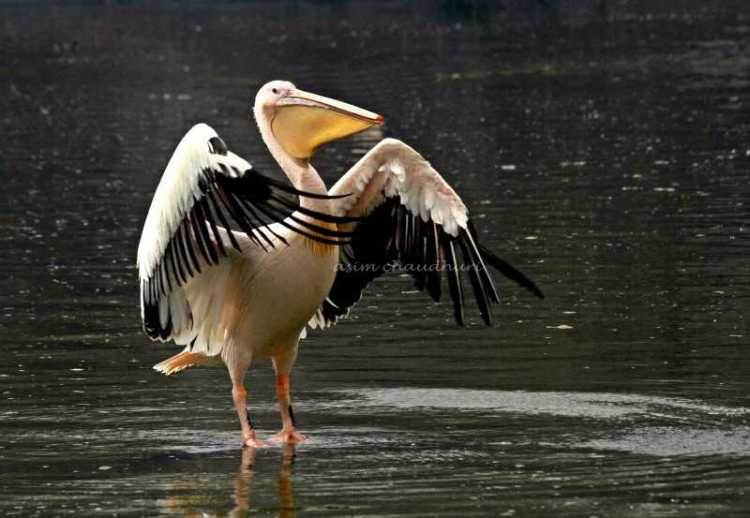 Bharatpur, places to visit in november in india