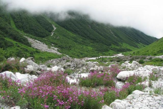 Valley of flowers, Places to visit in August in India