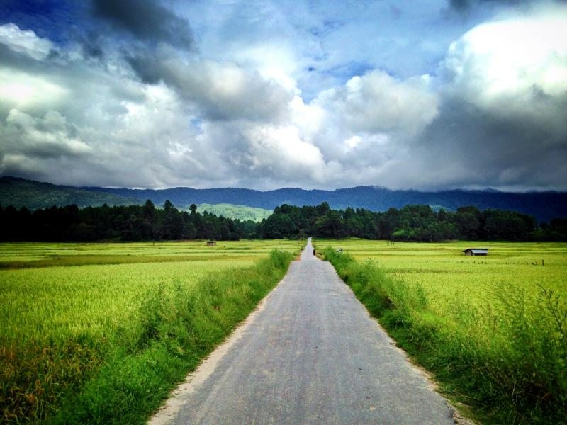 Rice fields at Ziro, November Holiday destinations