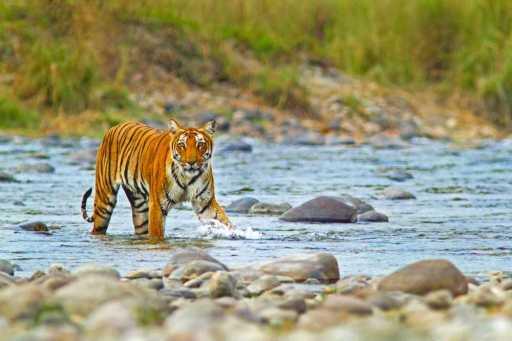 Corbett National Park Tourism (2021) Tiger Reserve, Wildlife Sanctuary
