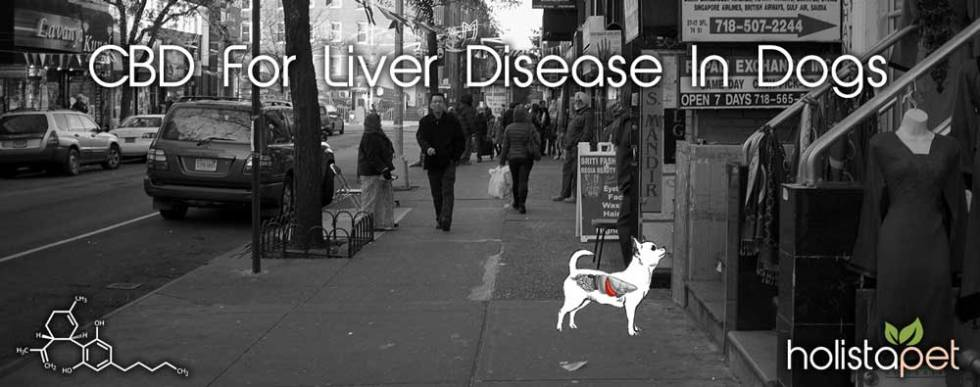 CBD-for-liver-disease-in-dogs-banner-city2