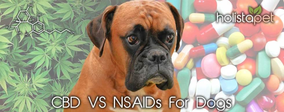 CBD vs NSAIDs for Dogs