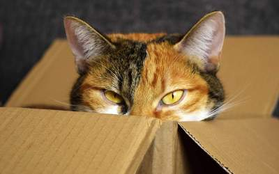 5 Easy Holistic Actions! That Stop Cats From Urinating Outside the Litterbox