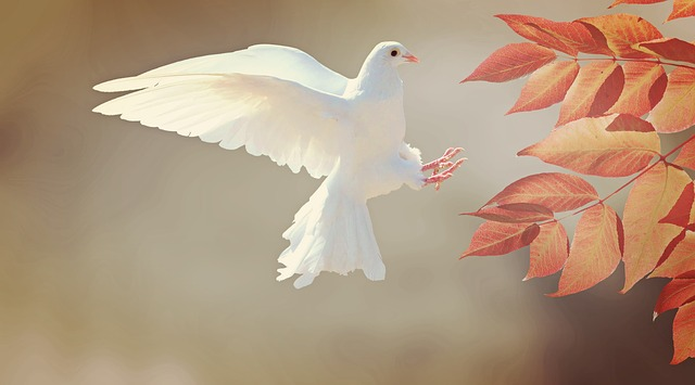 natural anxiety relief white dove