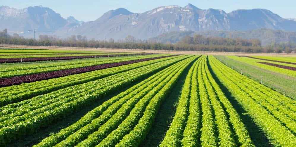 U.S. organic farmland hits record 4.1 million acres in 2016