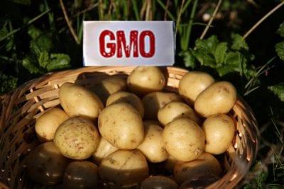 USDA approves genetically engineered potatoes despite GMO backlash