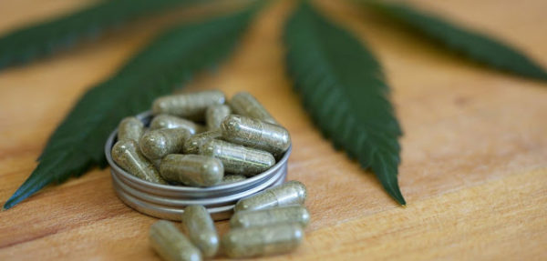 Six plants other than cannabis that are high in healing cannabinoids