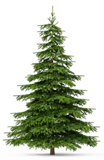 Does your christmas tree need to be organic too?