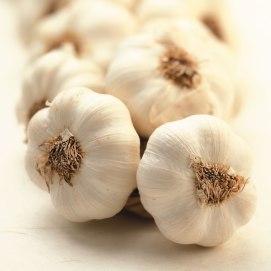 garlic 310 0 Conditions