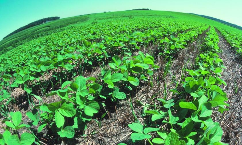 Long-term outlooks: Australian farmers eliminate herbicide-resistant 'superweeds' using natural non-herbicidal methods